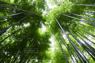 京都嵐山の写真・画像素材[1665847]