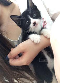 仔猫と戯れるの写真・画像素材[1659641]