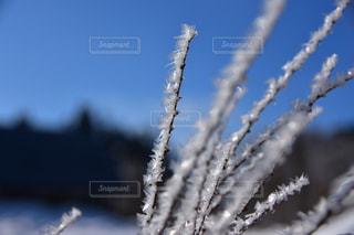 風景,冬,雪,美しい,樹木,新潟県