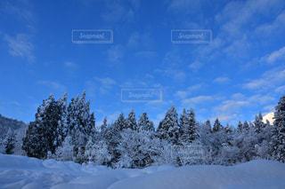 風景,空,冬,雪,美しい,樹木,新潟県