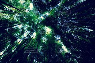 竹林の風景の写真・画像素材[1668582]