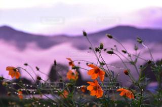 自然の写真・画像素材[2006802]