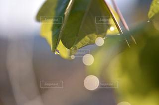 自然の写真・画像素材[2011937]