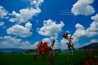 忘れ草の写真・画像素材[2011957]