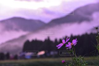 風景の写真・画像素材[2026655]