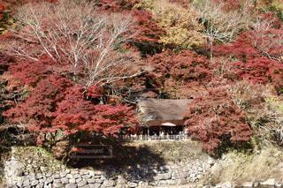 平穏な場所での紅葉の写真・画像素材[1648511]