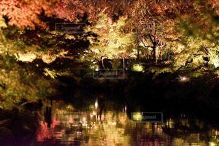 水辺の紅葉の写真・画像素材[1649224]