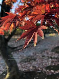 近くの木のアップの写真・画像素材[1650823]