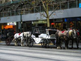 風景,冬,街並み,白,黒,茶色,道路,観光,旅行,旅,馬,馬車,オーストラリア,ストリート,海外旅行,町並み,茶,メルボルン,白馬,インスタ映え,snowflake