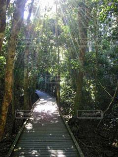 自然,風景,木,緑,晴れ,山,日差し,光,トレッキング,木々,観光,楽しい,樹木,リラックス,旅行,太陽光,オーストラリア,マイナスイオン,海外旅行,ブリスベン,陽光,緑色,山歩き,snowflake