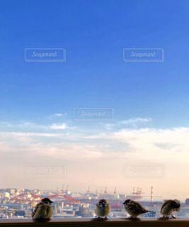すずめと青い空の写真・画像素材[1863963]