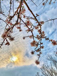 開花が始まった桜🌸キレイな空模様と一緒に写しました。の写真・画像素材[1866285]