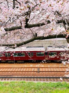 満開の桜と阪急電車🌸🚃の写真・画像素材[2017700]