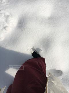 自然,冬,雪,白,影,足跡,鳥取砂丘,足もと,ホワイトカラー