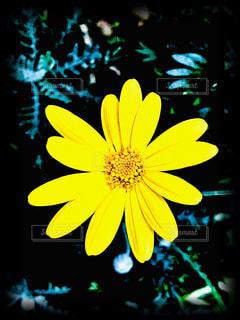 花,大阪,黄色,緑地公園,yellow,服部緑地,豊中,映える