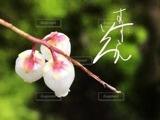 自然,京都,白,色,手書き,鈴蘭,日本語,すずらん,ひらがな,平仮名,無鄰菴