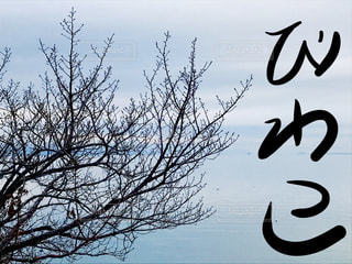 文字,湖,青,枝,樹木,琵琶湖,手書き,滋賀県,日本語,ひらがな,びわ湖,びわこ,平仮名
