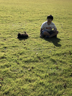 犬,公園,動物,かわいい,可愛い,子犬,黄昏,ちびっこ