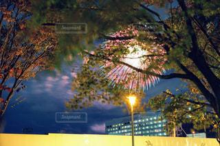 紅葉の木々と花火の写真・画像素材[1654000]