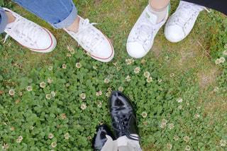芝生の上の靴のグループの写真・画像素材[1805992]