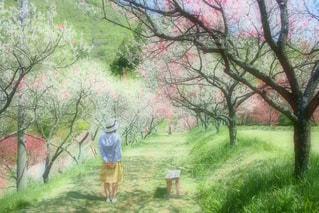 空,花,春,屋外,晴天,後ろ姿,帽子,散歩,ベンチ,幻想的,女の子,草,爽やか,樹木,ふわふわ,スカート,人物,背中,人,後姿,並木,さんぽ,長野,さわやか,ふんわり,お散歩,花桃,おさんぽ,草木,ハナモモ,はなもも