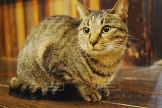 木製テーブルの上に座っている猫の写真・画像素材[1654119]