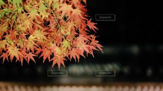 近くの植物のアップの写真・画像素材[1654120]