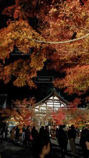 木の隣に立っている人のグループの写真・画像素材[1681782]