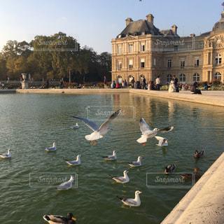 風景,公園,鳥,屋外,海外,散歩,池,夕方,ヨーロッパ,景色,観光,旅行,フランス,パリ,海外旅行,カモ,リュクサンブール公園,レジャー・趣味