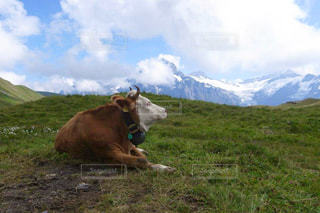 自然,風景,空,夏,動物,絶景,屋外,海外,緑,牛,山,景色,観光,草,旅行,スイス,海外旅行,眺め,グリンデルワルド,グリンデルワルト,レジャー・趣味,フィルスト
