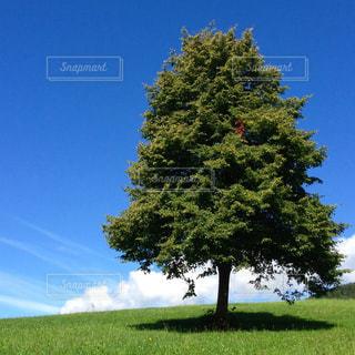 芝生のフィールドのツリーの写真・画像素材[1860478]