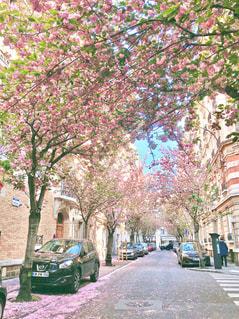 風景,春,桜,海外,ピンク,旅行,フランス,可愛い,パステルカラー,さくら,おしゃれ,フォトジェニック,ファンシー,インスタ映え,レジャー・趣味
