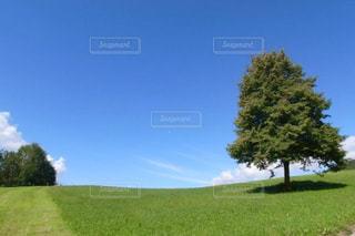 自然🌸の写真・画像素材[3339162]