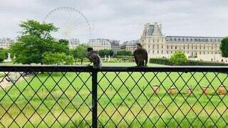 空,公園,動物,鳥,屋外,草,フランス,パリ,像,すずめ,雀,スズメ,動画,会話
