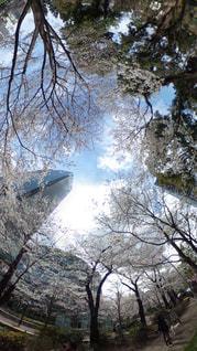 森の大きな木 - No.1100247