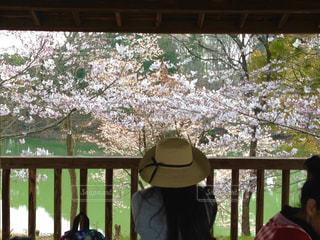 女性,公園,桜,屋外,ピンク,緑,綺麗,後ろ姿,帽子,池,花見,思い出,桜の花