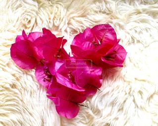 花,ピンク,カラフル,綺麗,ハート,flower,ブーゲンビリア,pink