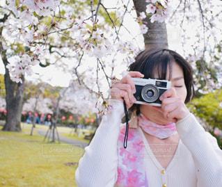 枝垂れ桜とOLYMPUS TRIP 35の写真・画像素材[2273198]