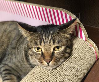 ソファーでくつろぐ猫の写真・画像素材[2330921]