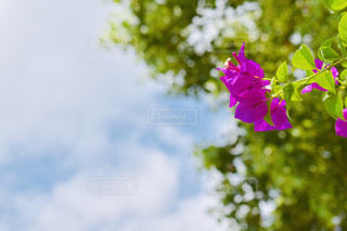 花のクローズアップの写真・画像素材[2438516]