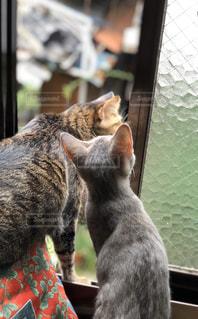 猫,動物,ペット,子猫,仔猫,人物,哺乳類,ネコ