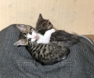 猫,動物,仲良し,ペット,子猫,仔猫,人物,可愛い,哺乳類,ネコ