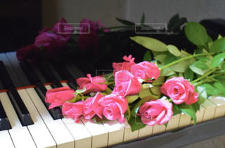 薔薇の花束の写真・画像素材[3087369]