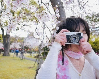 桜の花の下で撮影の写真・画像素材[3458980]