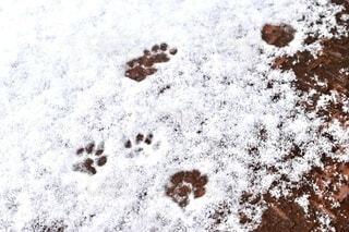 可愛い足跡の写真・画像素材[4155072]
