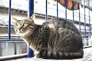 ベランダから景色を眺める猫の写真・画像素材[4533621]