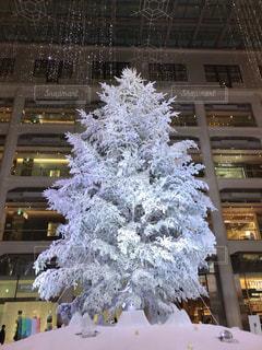 冬,クリスマス,クリスマス ツリー