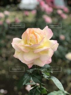 花のクローズアップの写真・画像素材[4878103]