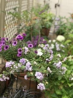 my gardenの写真・画像素材[4878106]