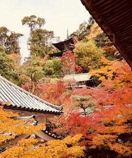 京都の秋の写真・画像素材[1667052]